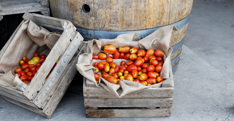 Tomaten mit Fässern